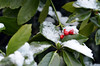 Berries by Louis Bamford