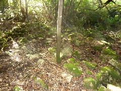 Ancienne bergerie de San Martinu : les ruines après démaquisage