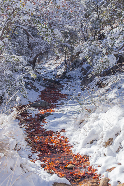 Sycamore Leaf Creek?