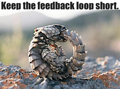 keep the feedback loop short