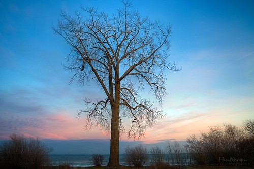 trees sunset tree canon stand alone branches bluesky stading windpoint nguyenphotos