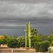Arizona Autumn Weather by oybay©