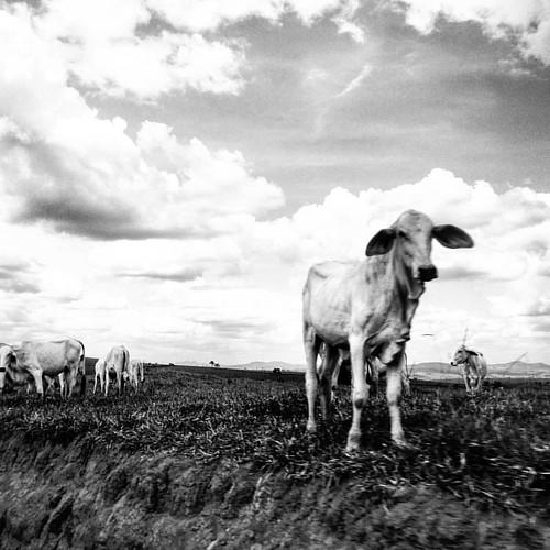 Viagem pelas fazendas do extremo sul da Bahia.  #contrast #contraste #light #blackandwhite #foto #snapshot #black #white #perspectiva #perspective #estrada #bw #pretoebranco #ba #bahia #Brasil #photographer #fotografia #interiordabahia #extremosuldabahia
