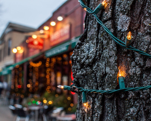 christmas tree sign lights store cityscape unitedstates bokeh massachusetts streetscene somerville views holidaydecorations davissquare unidentified 365photoproject davesfreshpasta