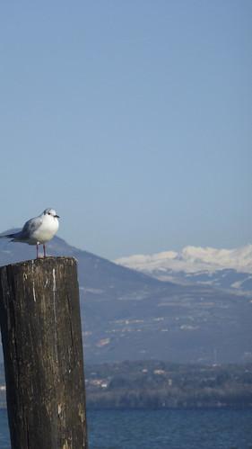 lone bird with Carega in the back