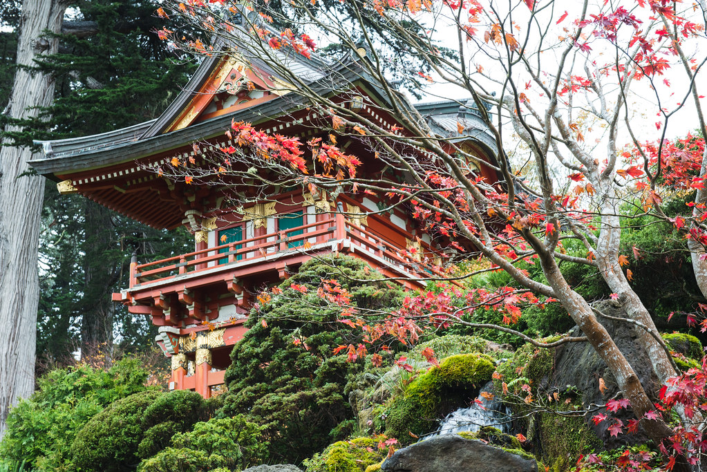 The Japanese Tea Gardens, Golden Gate Park