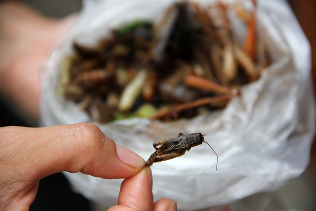 8263583212 f546b2debd o How to Eat Scary Insects, Worms, and Bugs in Thailand
