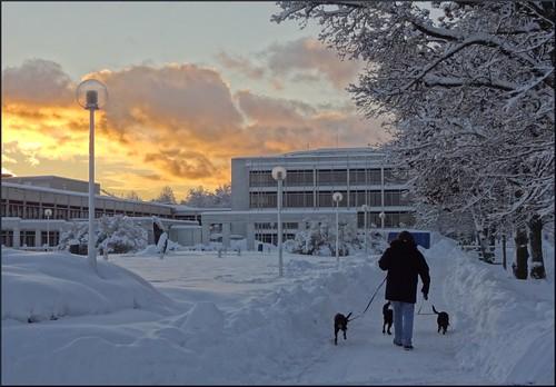 morning trees winter snow dogs sunrise mariehamn åland självstyrelsegården
