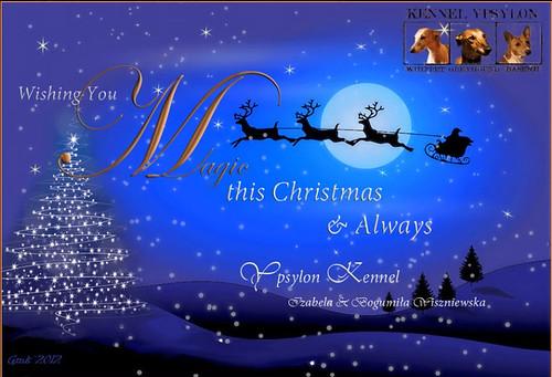 Weihnachten2012YpsilonWHippets