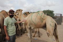 Camel Market (13)