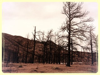 Waldo Canyon Fire, six months later