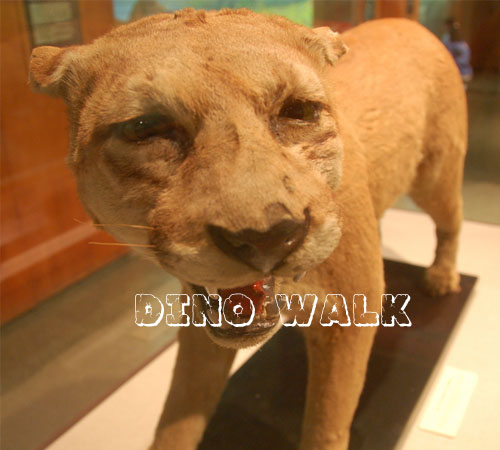 Animatronic Smilodon Animal for Sale