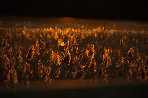 sunset red golden georgetownsc pentaxart pentaxk5 pentaxsmc18135mm