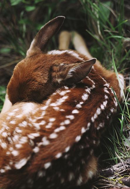 Deer_Inspiration (4)