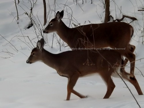Wintertime Deer by countrylife4me1