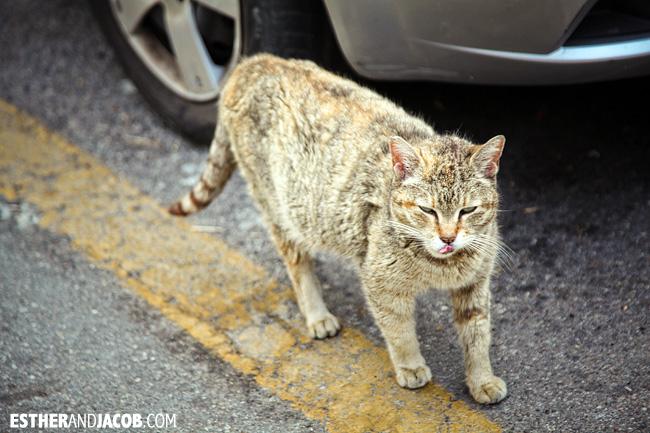 stray cats in Corniglia | Cinque Terre Italy | Travel Photography
