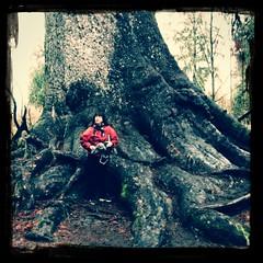 Big Tree n Me