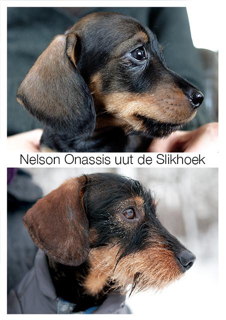 Nelson Onassis uut de Slikhoek