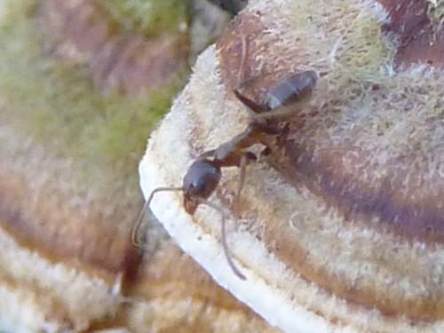 Fungus Closeups