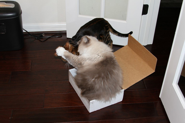 Tyco The Ragdoll Defends His Box
