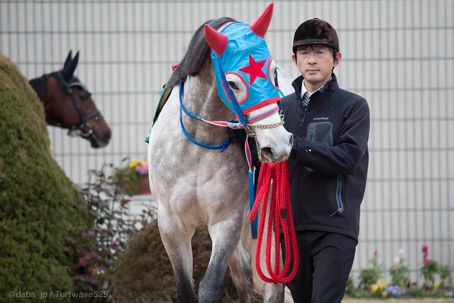 20130127 シゲルスダチ / Shigeru Sudachi