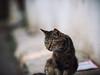 Street cat 159 by Yalitas