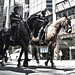 Police, Toronto