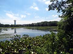 Morgan Days Park - Smith Pond (10)
