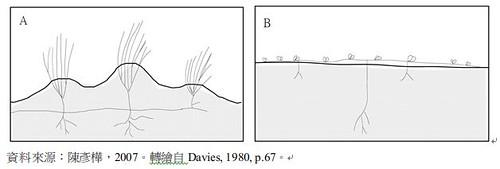 植物生長型與沙丘地形起伏