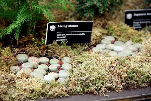Living-Stones