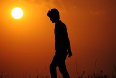 backlighting, sunlight, sun, evening, silhouette, morning, dusk, sunset, sunrise,