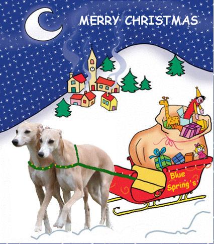 Weihnachten 2012 BlueSprings