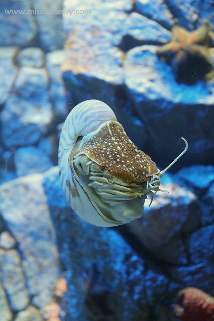 RWS S.E.A Aquarium 539