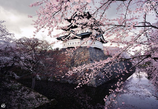 Hirosaki Castle in Spring. Japan. © Glenn E Waters.弘前城. Explored. Over 3,500. visits to this image.