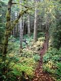 寇馬克斯谷信託組織雖然靠志工運作,但保育自然資源十分積極