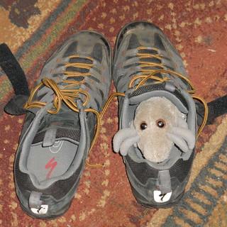 Dust Mite shoe