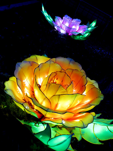 Glowing Flowers