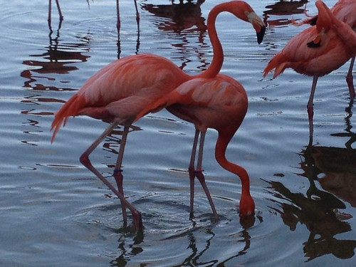 Lion Country Safari - flamingoes