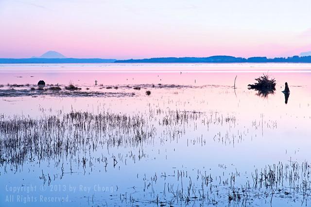 Skagit Bay, 2013