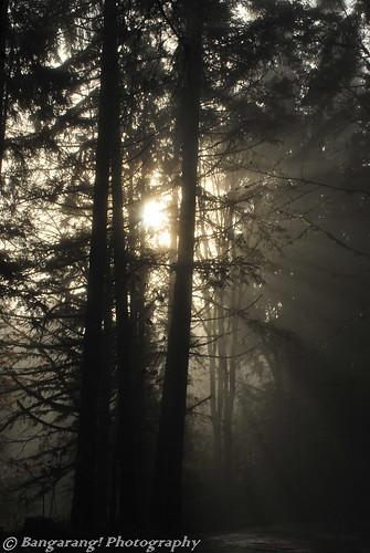 trees light nature fog forest sunrise nikon silouhette d60 bangarang bangarangphotography