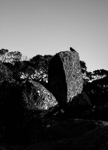 sunrise australia alpine newsouthwales crow charlottepass