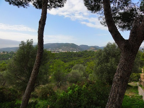 Tree view from Castell de Bellver