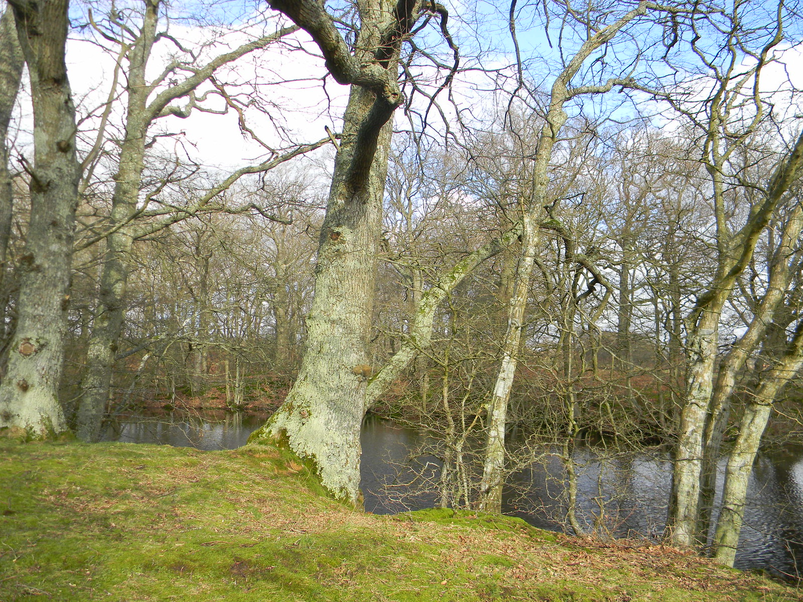 Trees by pond Stonegate Circular