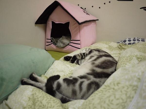 1我們家皇后娘娘晚上在寢宫睡覺時,公公都很乖的守在外面保護她...