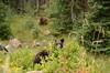 Bears_002