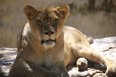 Canon 5d Mark IV test from the Albuquerque zoo