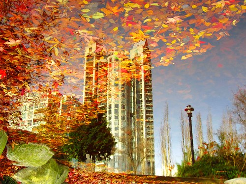 Water Art:  Veiled reflections