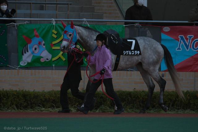 20121209 シゲルスダチ / Shigeru Sudachi