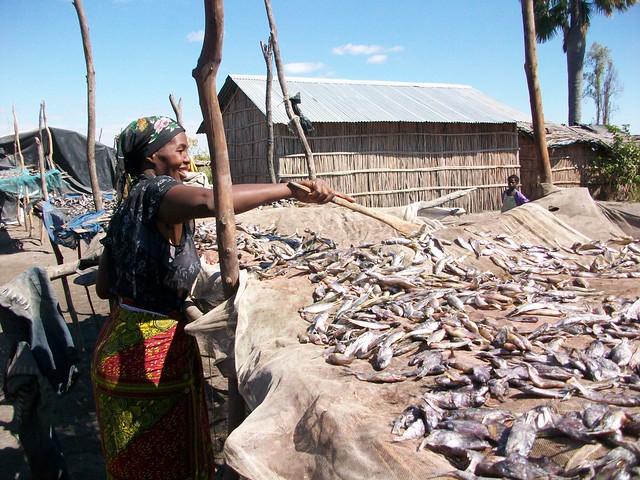 Woman Drying Fish Nyimba Fishing Camp, Zambia. Photo by Saskia Husken, 2010.