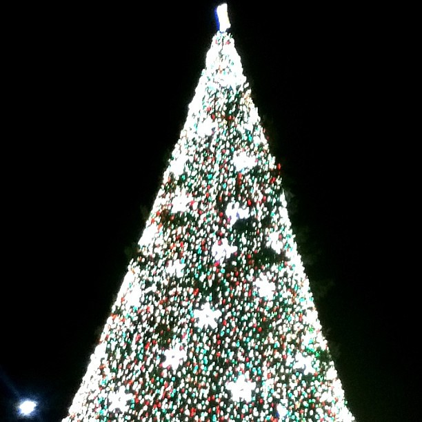 Top half of the National Christmas Tree #WhyDoeaInstaHaveToCropAllMyPhotos